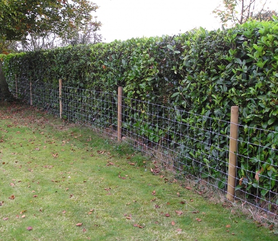 Stock netting against a hedge