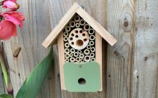 attracting solitary bees