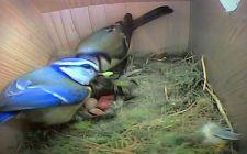 gardenature colour bird box cameras