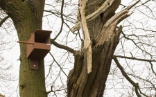 Kestrel Nestbox| gardenature.co.uk