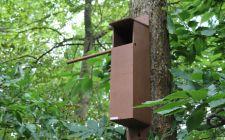 Tawny Owl Box with IP Camera