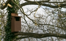 little owl nest box|gardenature