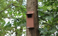little owl box| gardenature.co.uk