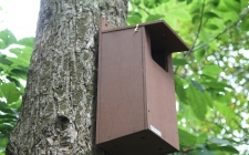 Little Owl Nest Box