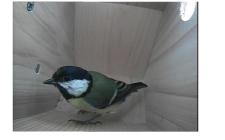 sideview bird box. gardenature.co.uk