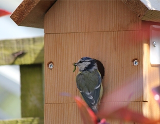 Garden Bird Boxes - Nesting Boxes | Gardenature
