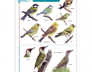 Field Study Guides - Birdguides | Gardenature