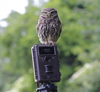 Motion Activated & Trail Cameras - Timelapse Cameras | Gardenature