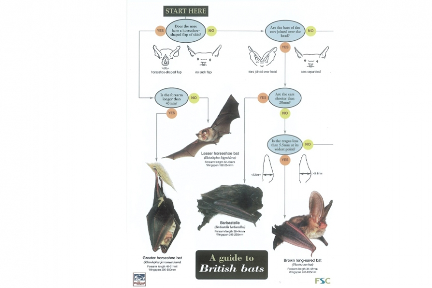 british bat guide - gardenature.co.uk