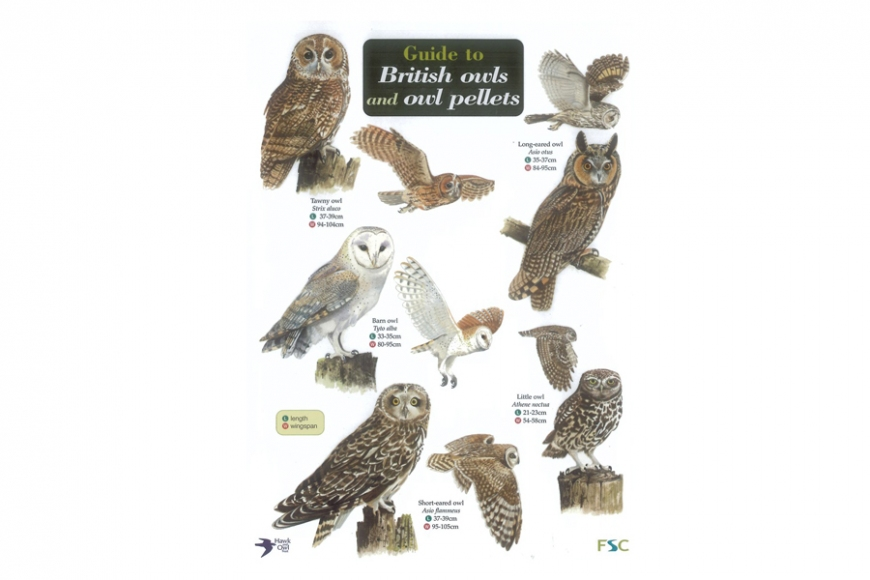 British Owls Guide. Gardenature.co.uk