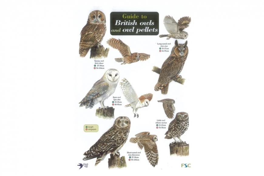 British Owls Guide. Gardenature.co.uk