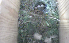 eggs camera | gardenature.co.uk