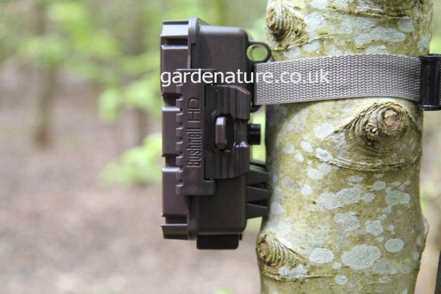 Bushnell Trophy cam aggressor. gardenature.co.uk