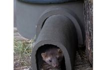 Pine Marten house | gardenature