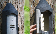 2f bat box | gardenature.co.uk