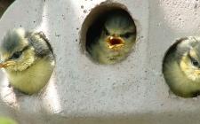 Schwegler bird box 2gr, gardenature.co.uk