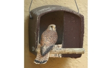 No28 Kestrel Box | gardenature.co.uk