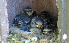 Schwegler nesting. gardenature.co.uk