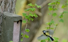 Schwegler bird box-gardenature.co.uk