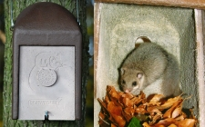 uk dormouse box-gardenature.co.uk
