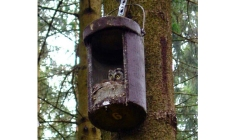 owl box No 4 | gardenature.co.uk