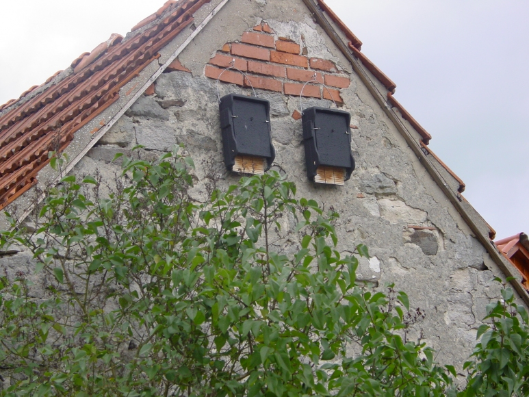 1FF bat box for wall | gardenature.co.uk