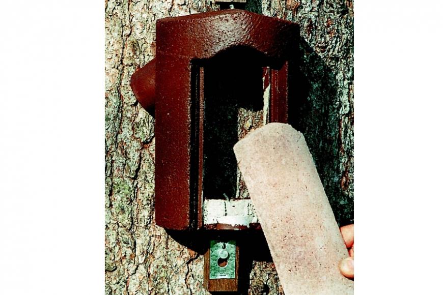 2b treecreeper box   gardenature.co.uk
