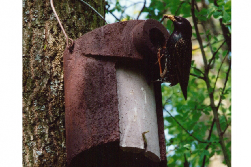 Starling Nest box | gardenature.co.uk