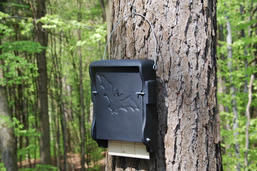 1FF Bat Box | gardenature.co.uk