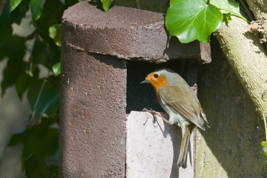 Schwegler robin box -gardenature.co.uk