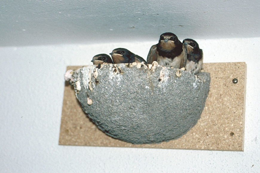 swallow bowl -gardenature.co.uk