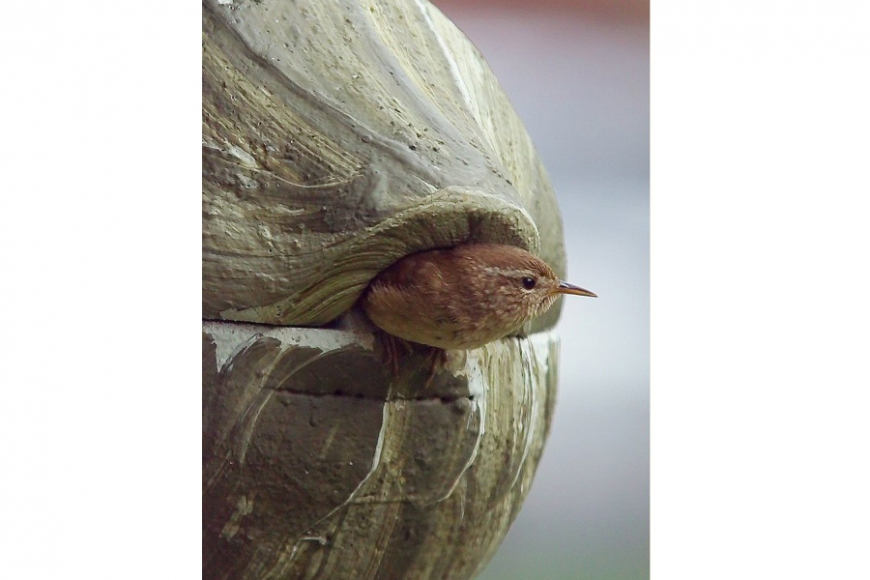 bird box for wrens, gardenature.co.uk