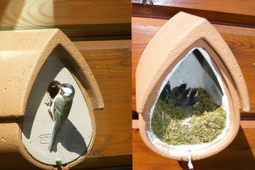 Avianex Tit box- gardenature.co.uk