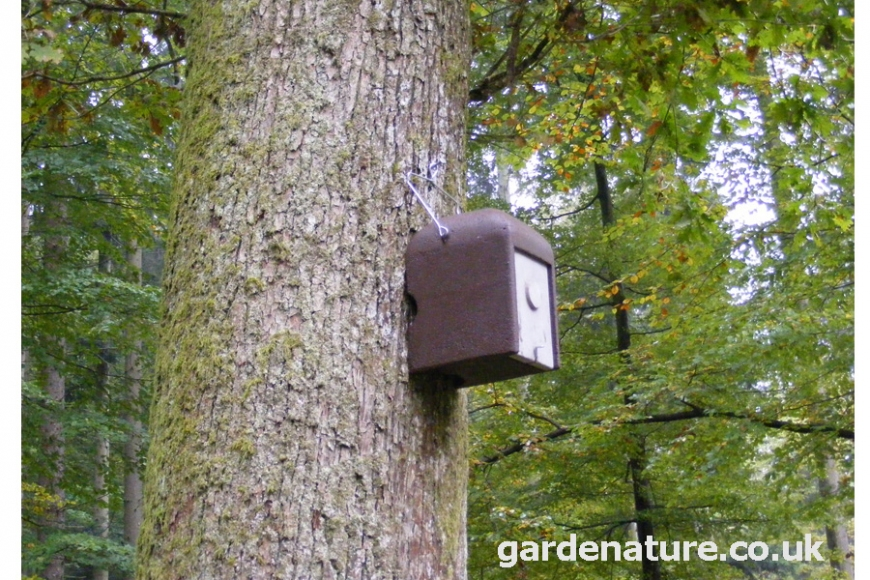 schwegler 1KS dormouse nest box