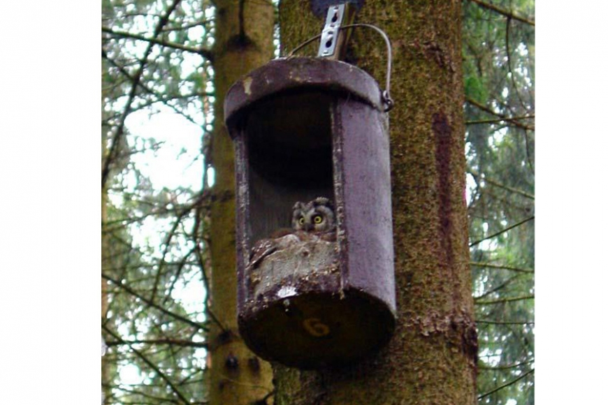 owl box No 5 | gardenature.co.uk