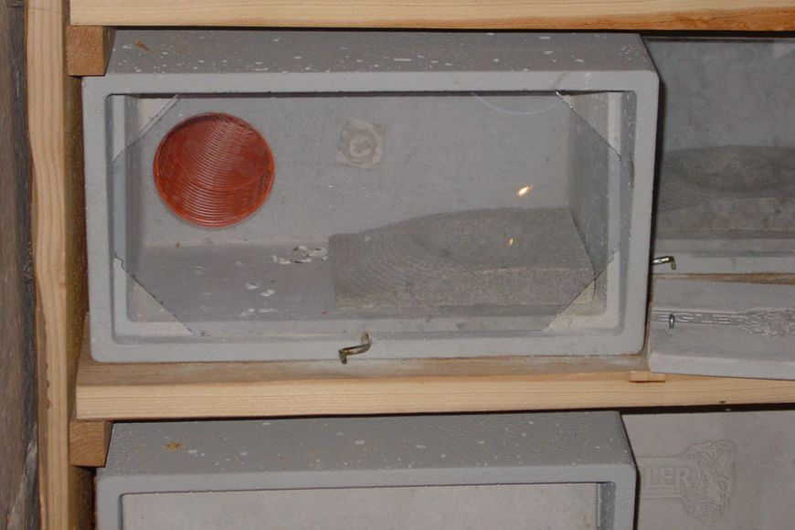 schwegler observation swift box No 14