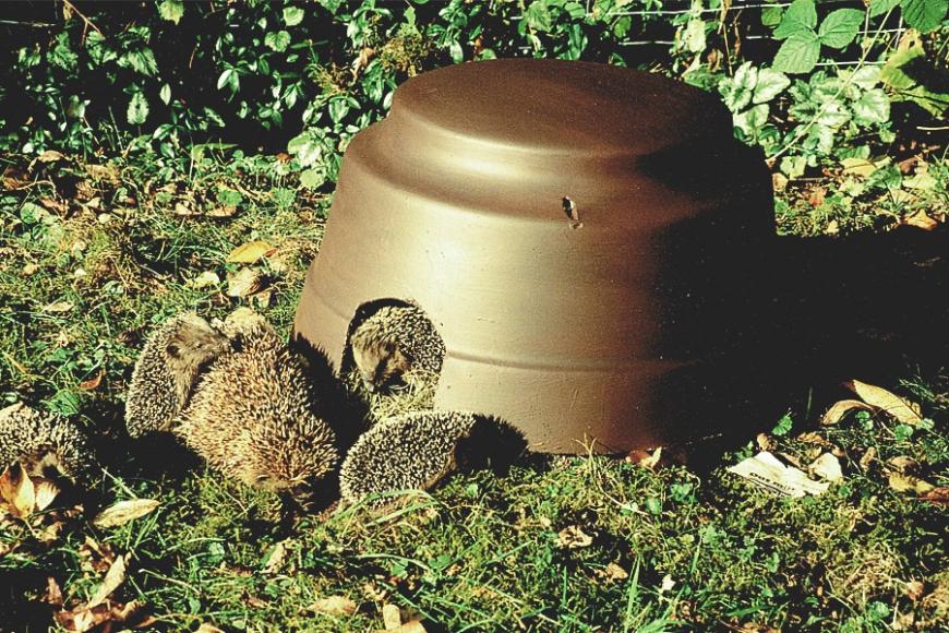 Schwegler Hedgehog house | gardenature.co.uk