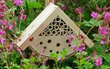 Bug Box | gardenature.co.uk