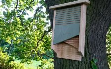conservation bat box | gardenature