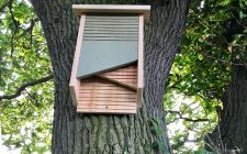 woodland bat boxes| gardenature.co.uk