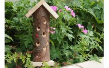 Ladybird tower | Gardenature