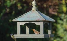 NT classic hanging bird feeder table