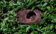 robin nester   gardenature.co.uk