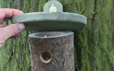 log bird nesting box | gardenature