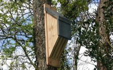 vincent bat box | gardenature