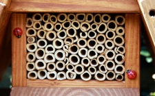 Insect House   gardenature.co.uk