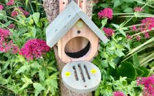 butterfly / moth house | gardenature