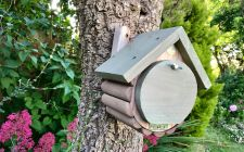 Dormouse house | gardenature