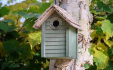 green nest boxes | gardenature