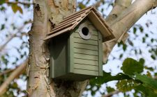 New England Nest box